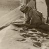 Lehnert et Landrock - BÉDOUINS - GRAND Tirage Argentique Original 1910 - 28x58cm